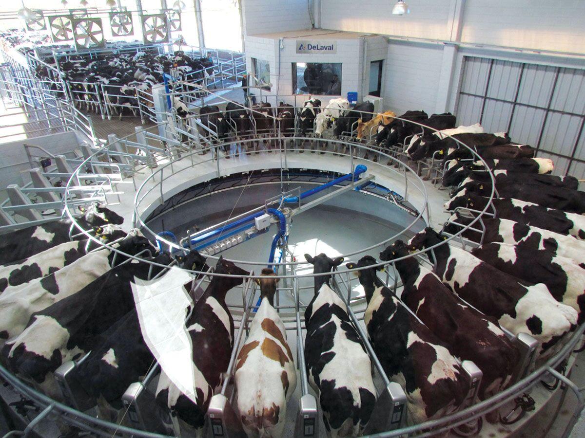 Una mirada a futuro de la industria láctea