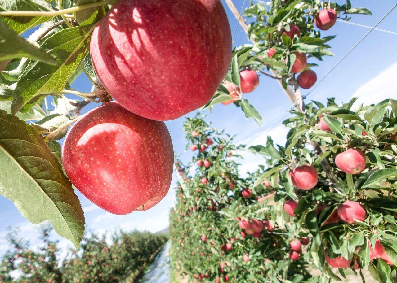 ¿Qué deben hacer los productores de manzanas de aquí al 2030?