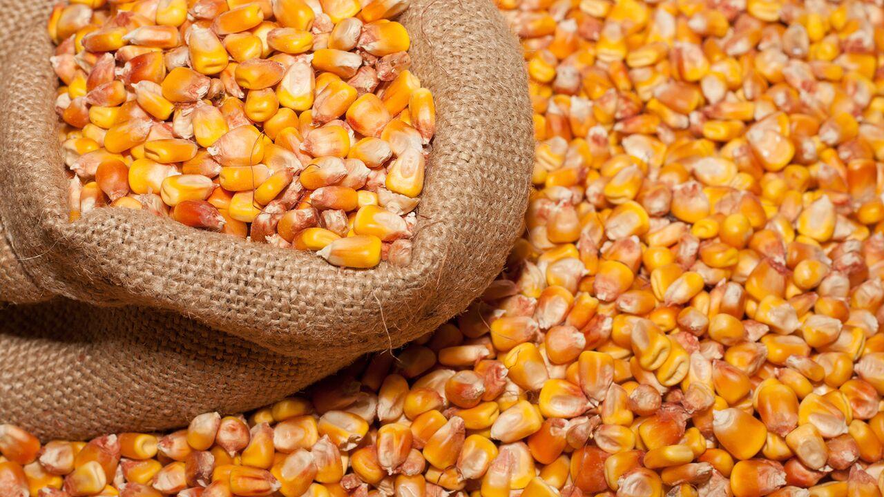 ¿Cómo se observa la industria de semillas al 2030?