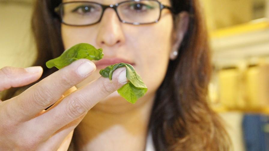 Innovadora tecnología permite congelar y descongelar frutas y hortalizas sin pérdida de calidad