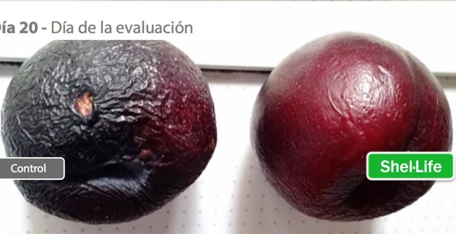 Bioquímicos chilenos crean segunda piel que extiende vida de las frutas