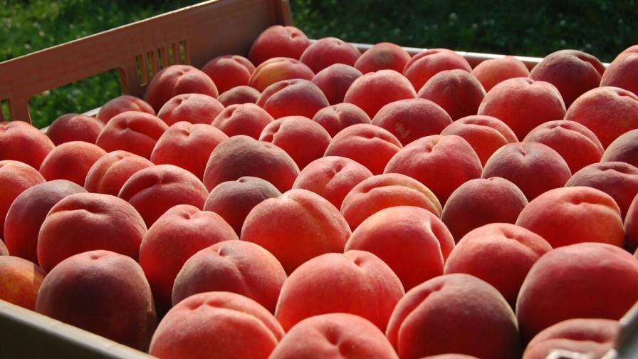 Exportación de nectarines chilenos aumentó en un 11%
