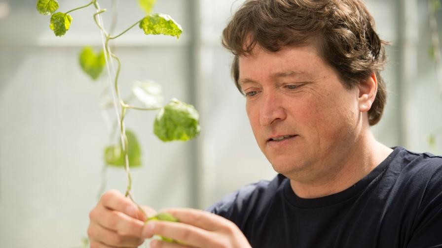 Identifican nueva vía para luchar contra enfermedades de plantas