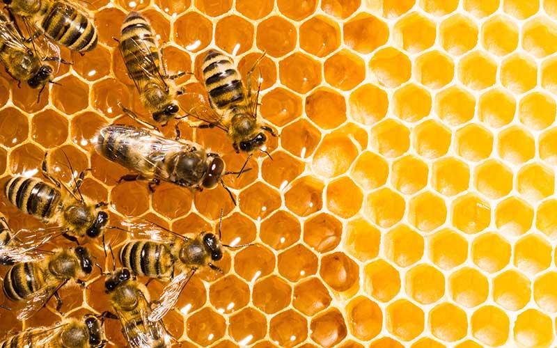 Medidas para salvar a las abejas