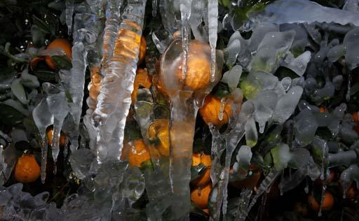 naranja congeladas