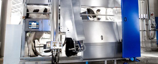 INIA instalará lechería robotizada