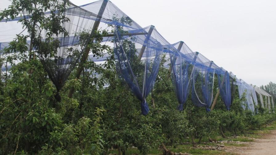 Invención de mallas bicolor para la Fruticultura
