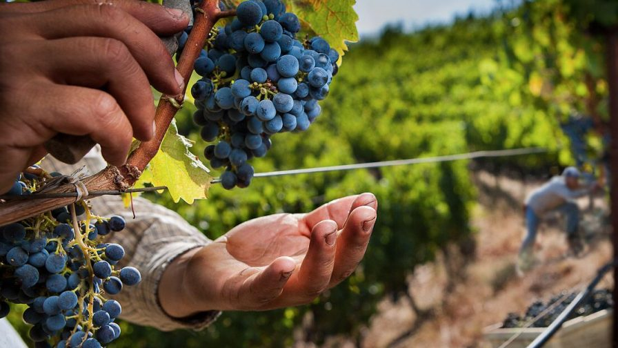 PMA: La agricultura chilena necesita mayor especialización de la mano de obra