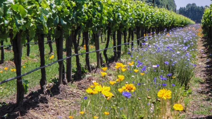 Soluciones Orgánicas en vitivinicultura
