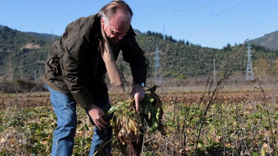 Gobierno destinará $1.700 millones para la reconversión de los agricultores afectados