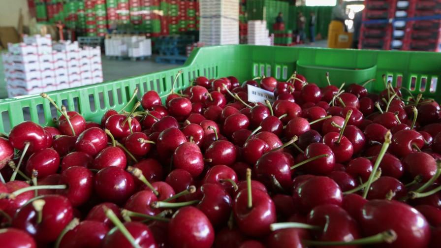 Exportaciones silvoagropecuarias totalizaron US$ 4.770 millones