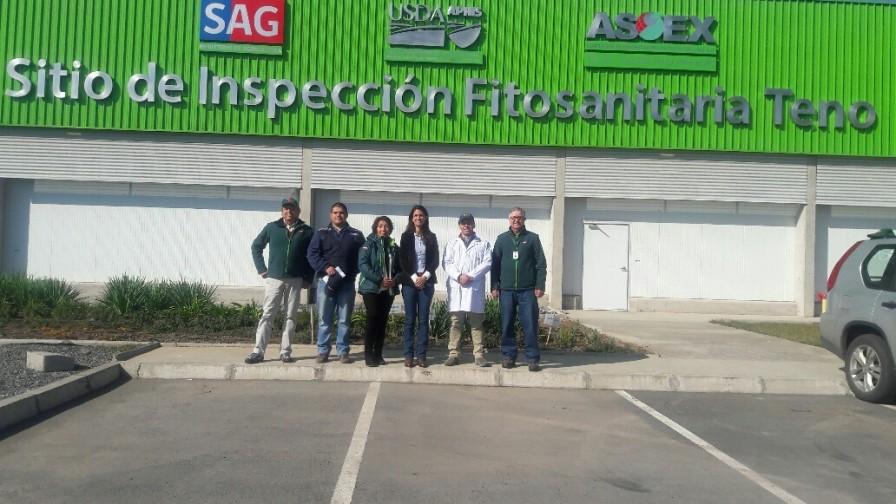Sitio de Inspección Fitosanitaria de Teno finaliza temporada de exportación