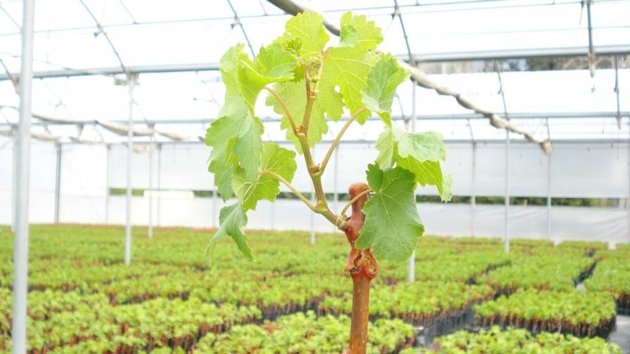 SAG se capacita en propagación de plantas frutales