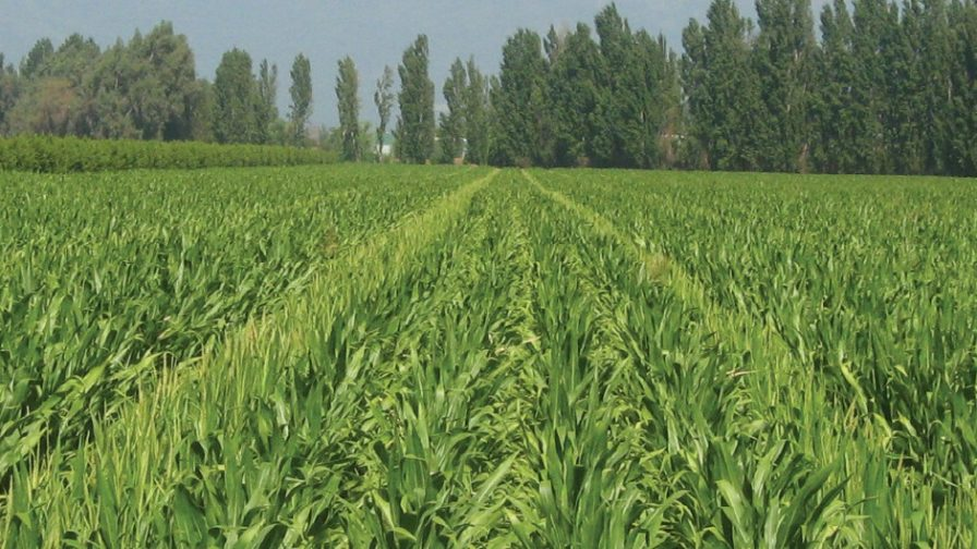 Actor clave en la industria de semillas transgénicas