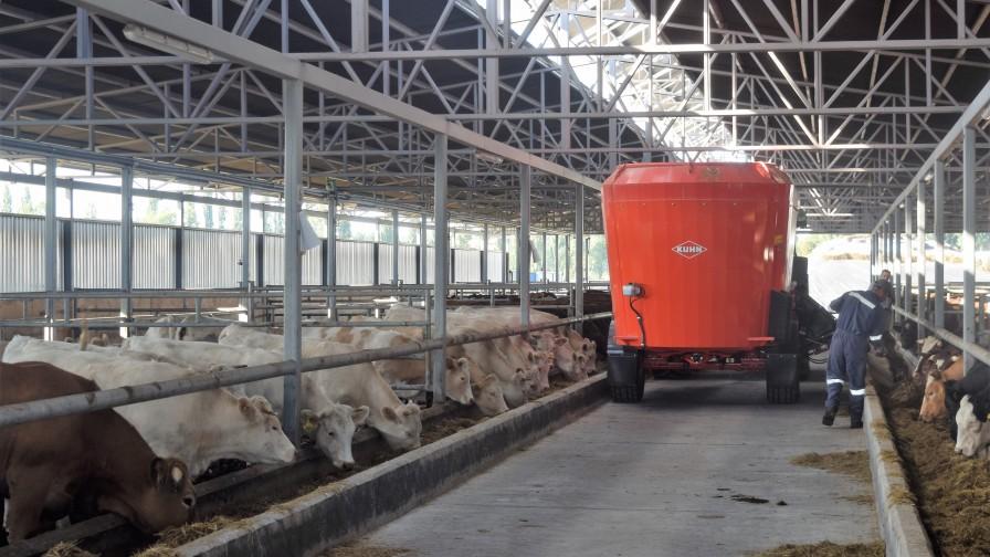 ¿Cuáles son las claves para la alimentación en sistemas ganaderos?