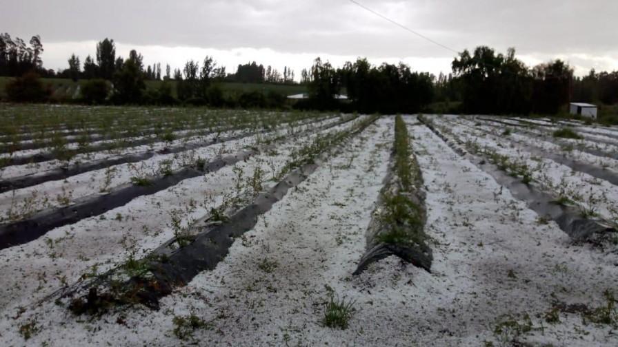 Consecuencias reales de los granizos y la lluvia