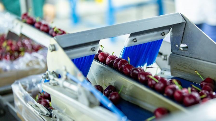 Inauguran nueva planta procesadora de cerezas