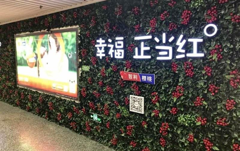 Nueva campaña de promoción de cerezas chilenas en China