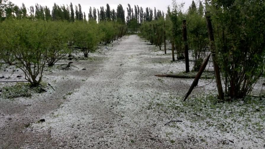 Fedefruta estima pérdidas de más de 200 millones a la fruticultura chilena