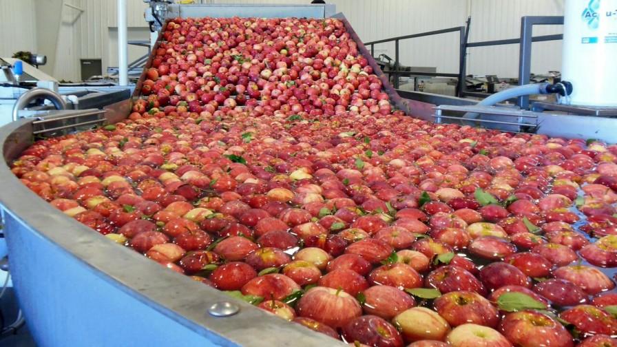 Fruta chilena marca record de exportaciones a China