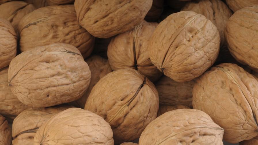 Lluvias podrían afectar hasta  un 3% de la producción nueces