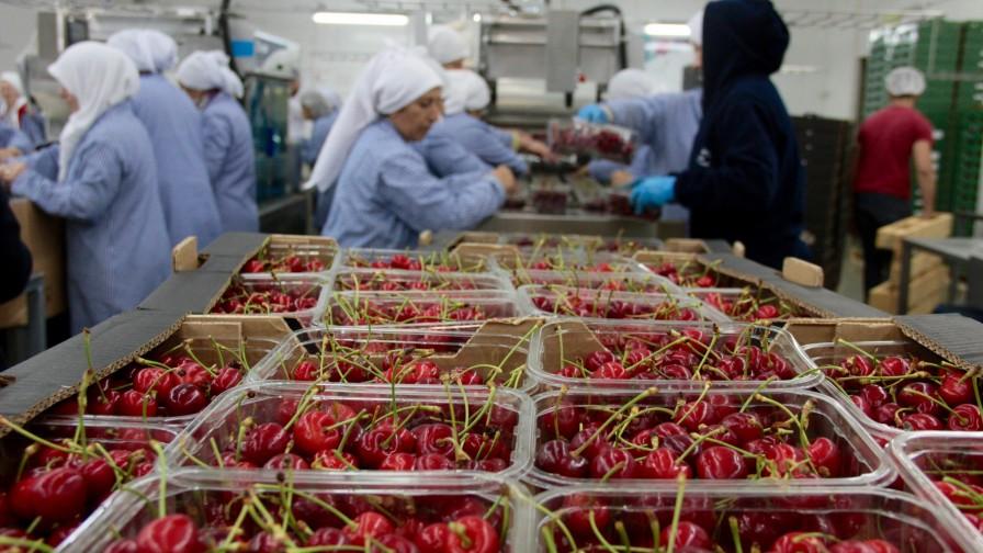 Guerra comercial obliga a buscar nuevos mercados para la fruta chilena