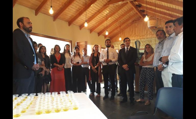 Aceite de Oliva del Valle del Huasco es reconocido con la Denominación de Origen