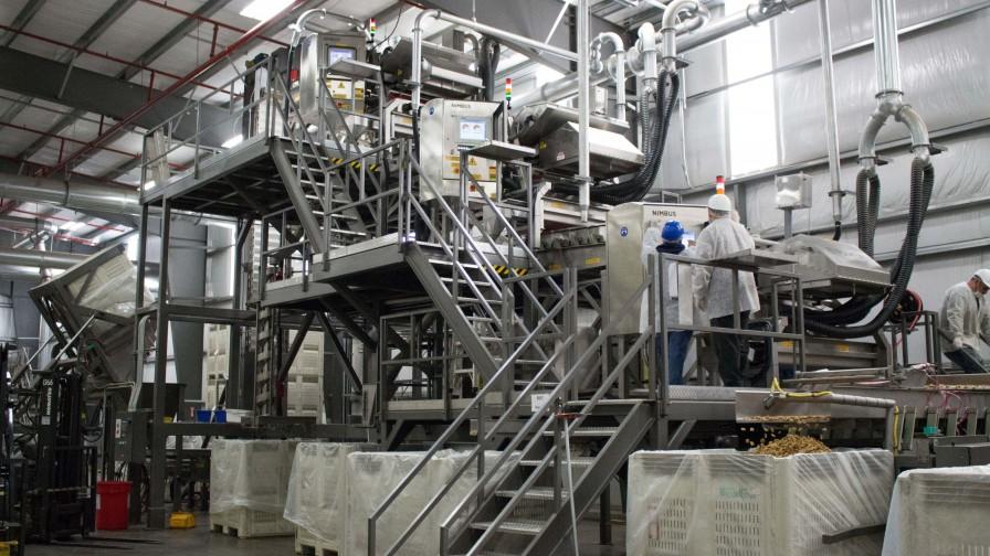 Tecnología basada en sensores aumenta calidad en productos de alimentos en Chile
