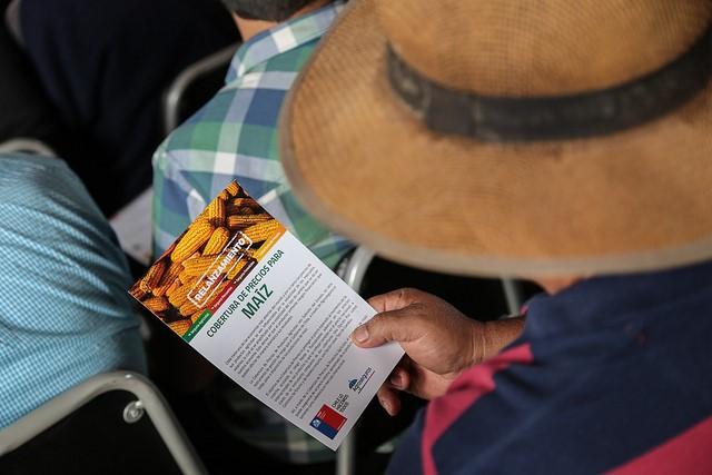 Cobertura de precios para el maíz protege a productores frente a variaciones de precios