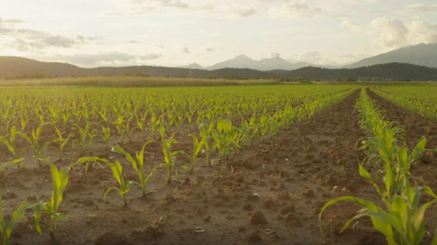 Inteligencia Artificial en la agricultura: análisis PMA