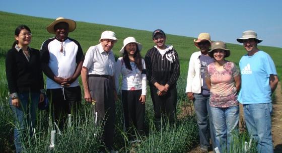 Desarrollan chilenos trigo para celiacos