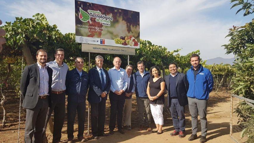 Se esperan 3 nuevas variedades de uva de mesa nacional y 10 selecciones avanzadas