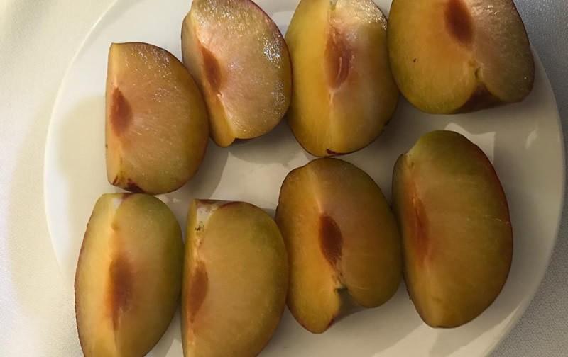 Los desafíos de Sweet Pekeetah la nueva variedad de ciruela creada por la U.Chile