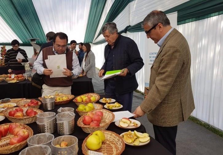 Primera manzana chilena de alta calidad y resistente a Venturia se presentará el 2021