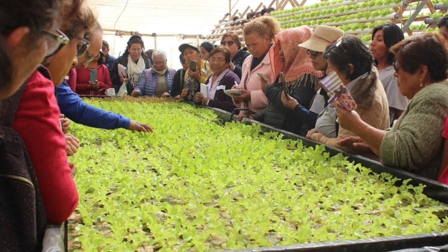 Mesa de la Mujer Rural se capacita en hidroponía
