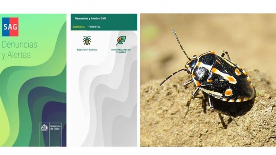 SAG lanza aplicación para identificar plagas agrícolas y forestales desde el celular