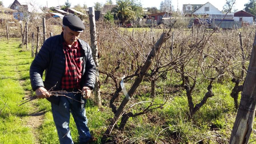 Identifican nuevas cepas de vino que permitirían ampliar fronteras de producción