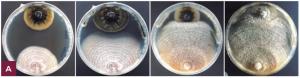 Hongos para controlar hongos
