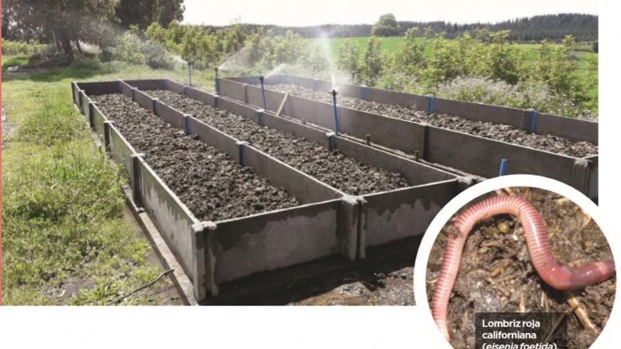 Lombricultura intensiva como alternativa para disminuir costos en fertilización