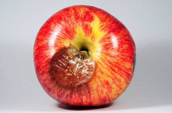 Nuevo sistema puede predecir nivel de incidencia de ojo de buey en manzanas