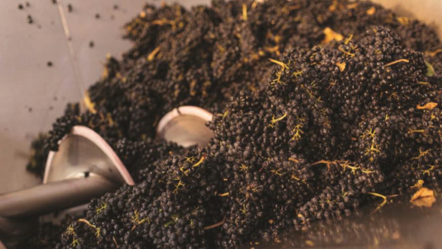 Tecnología de extracción basada en ultrasonido reutiliza residuos de la industria vitivinícola