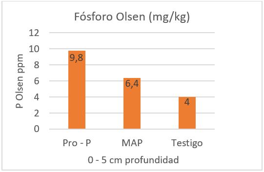 Sobre-fertilización con fósforo: La amenaza en los campos de Chile y el mundo
