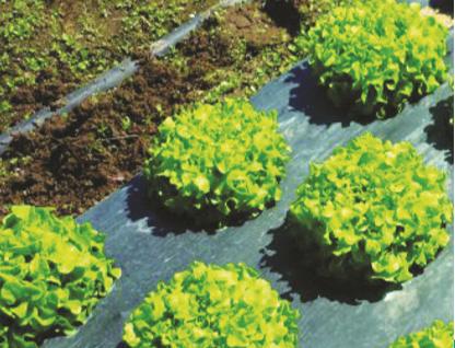 BASF presenta film para mulching biodegradables