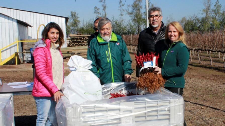 """Proyecto """"Sello de Calidad"""" comercializa las primeras cerezas y vides certificadas"""