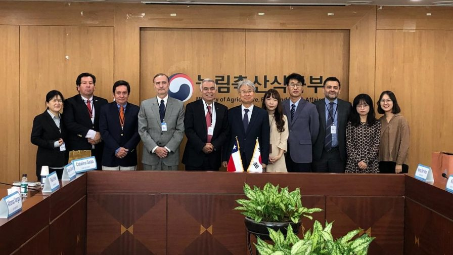 A paso firme avanza proceso de ingreso de paltas chilenas a Corea del Sur