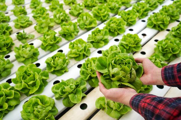 Automatización: una oportunidad de desarrollo para los productores de Cauquenes