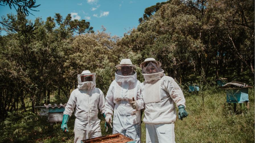 Start-up chilena desarrolla producto capaz de prevenir el Loque Americano, busca salvar miles de abejas