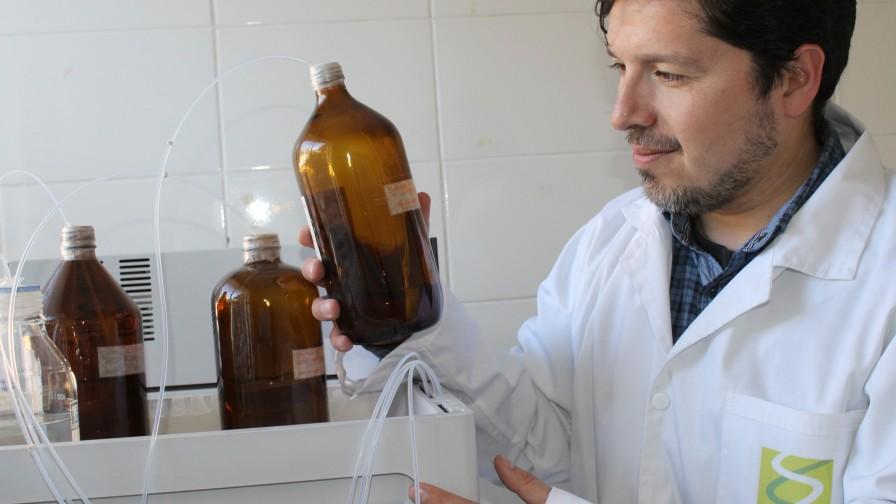 Cómo contribuye la bionanotecnología a generar los alimentos del futuro