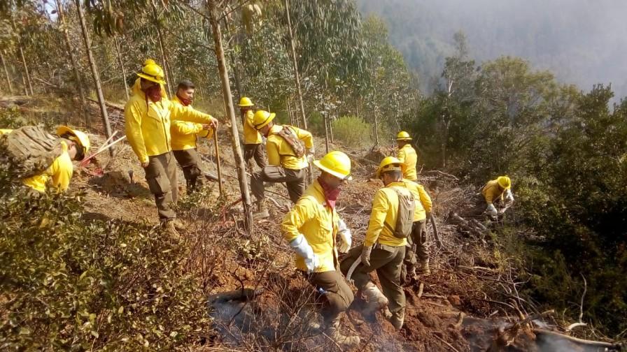 Incendios forestales llegan 989 este año, un aumento de más de 100%