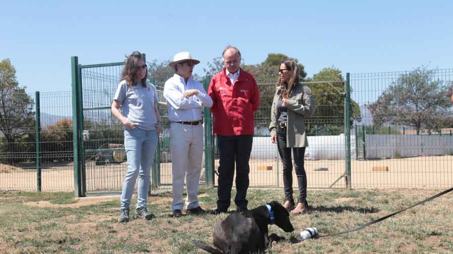 Perros abandonados podrán incorporarse a Brigada Canina del SAG